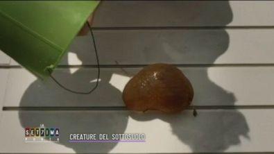 Creature del sottosuolo