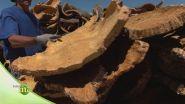 L'importanza dell'estrazione del sughero