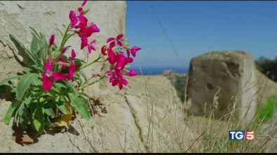 La splendida isola di Capraia