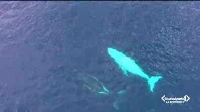 La balena che ricorda Moby Dick