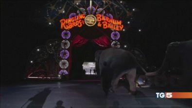 Domani l'ultimo spettacolo del Barnum Circus