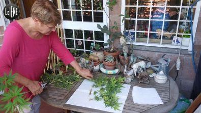 """Rita Bernardini: """"Distribuirò la cannabis del mio terrazzo"""""""