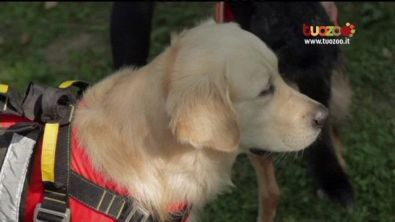 Cani in divisa: come diventare cane da soccorso
