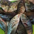 Pesce Fresco e prodotti a KM 0