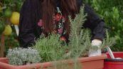 Come coltivare le piante aromatiche