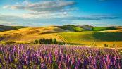 Alla scoperta della Toscana, il paradiso italiano della lavanda