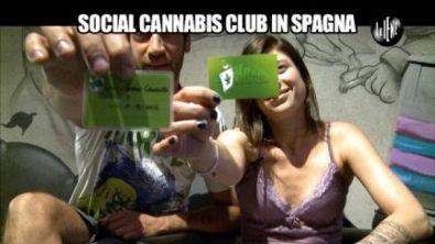 VIVIANI: Social Cannabis Club in Spagna