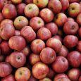 frutta e verdura zanei