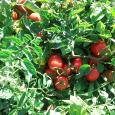 Azienda Agricola Casal Bio Plant prodotti alimentari
