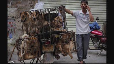 Festival di Yulin, attivista aggredita mentre salva i cani destinati al macello