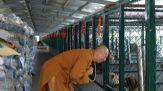 Il monaco buddista che ha salvato 8mila cani nel suo monastero