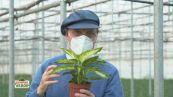 I segreti del botanico: le piante da interno