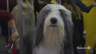 La scienza ricalcola l'età dei cani