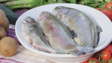 La trota: un pesce pregiato e poco calorico
