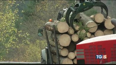 La Cina si compra i nostri alberi