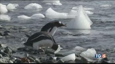 Ascoltiamo il grido d'aiuto del Polo Sud