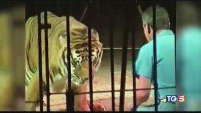 Domatore ucciso da quattro tigri