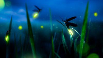 Come fare tornare le lucciole nel tuo giardino