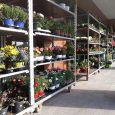 AR FIORI piante e fiori da giardino