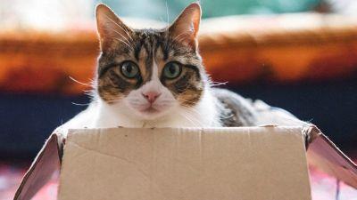 Perché il gatto si siede nelle scatole?