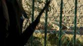 Talebani allo zoo e ragazze escluse da scuola: è la nuova Kabul