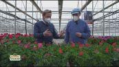 I segreti del botanico