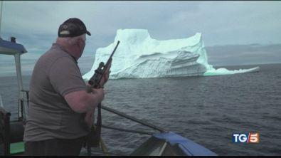 L'Artico agonizza e si cacciatori gli sparano