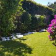 Vivai Etna azalea