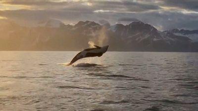 Orca salta fuori dal mare in Alaska: lo spettacolo naturale