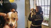 Perde il cane Milky durante la rapina: la storia a lieto fine