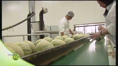 La nascita del melone e il controllo qualità