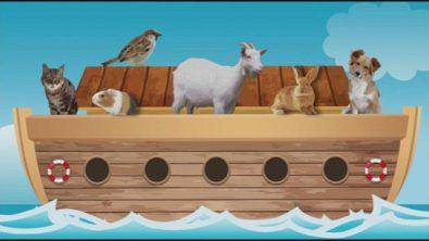 A bordo dell'arca oggi