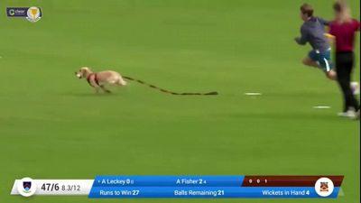 Cane invade il campo durante la partita: il video è tutto da ridere