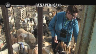 PASCA: Pazza per i cani