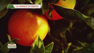 Le arance di Ribera