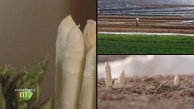L'asparago di Arcole