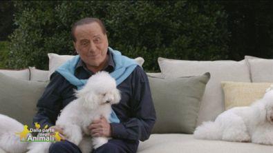 Silvio Berlusconi e gli amici a quattro zampe
