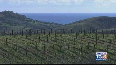 Gusto Di Vino: vitigni di Calabria