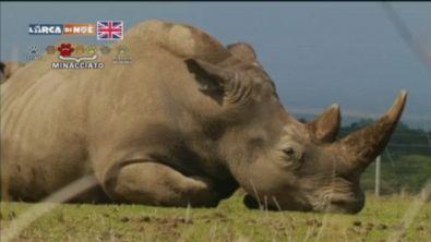 Rinoceronti in viaggio