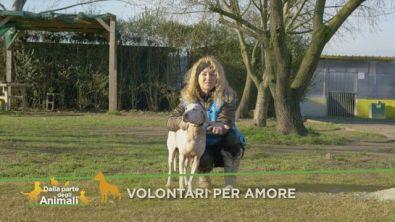 Volontari per amore