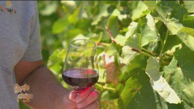 I vini della Calabria