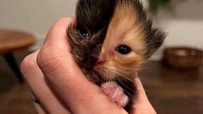 Apricot, la gattina con due facce