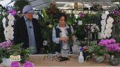 La cura delle orchidee