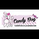 Toelettatura Candy Dog