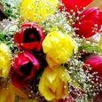 Fioreria Punto Fiore Vendita fiori