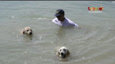 Swimming Dog a Milano