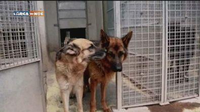 Kalù e Lara cercano famiglia
