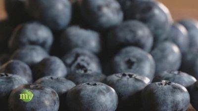 La coltivazione dei piccoli frutti