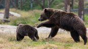 Lieto fine per i 101 orsi salvati da una fabbrica cinese