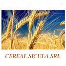 Cereal Sicula